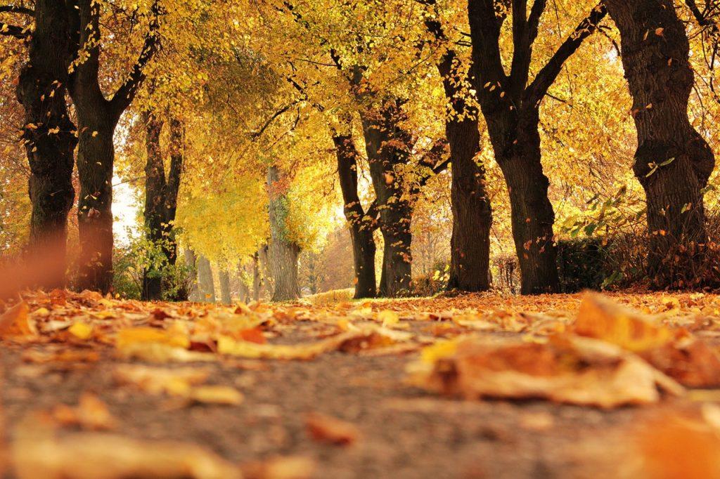 ferdinando masciotta foliage partire a ottobre